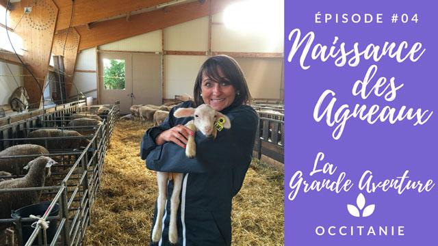LA GRANDE AVENTURE // Épisode 4 : Naissance des agneaux