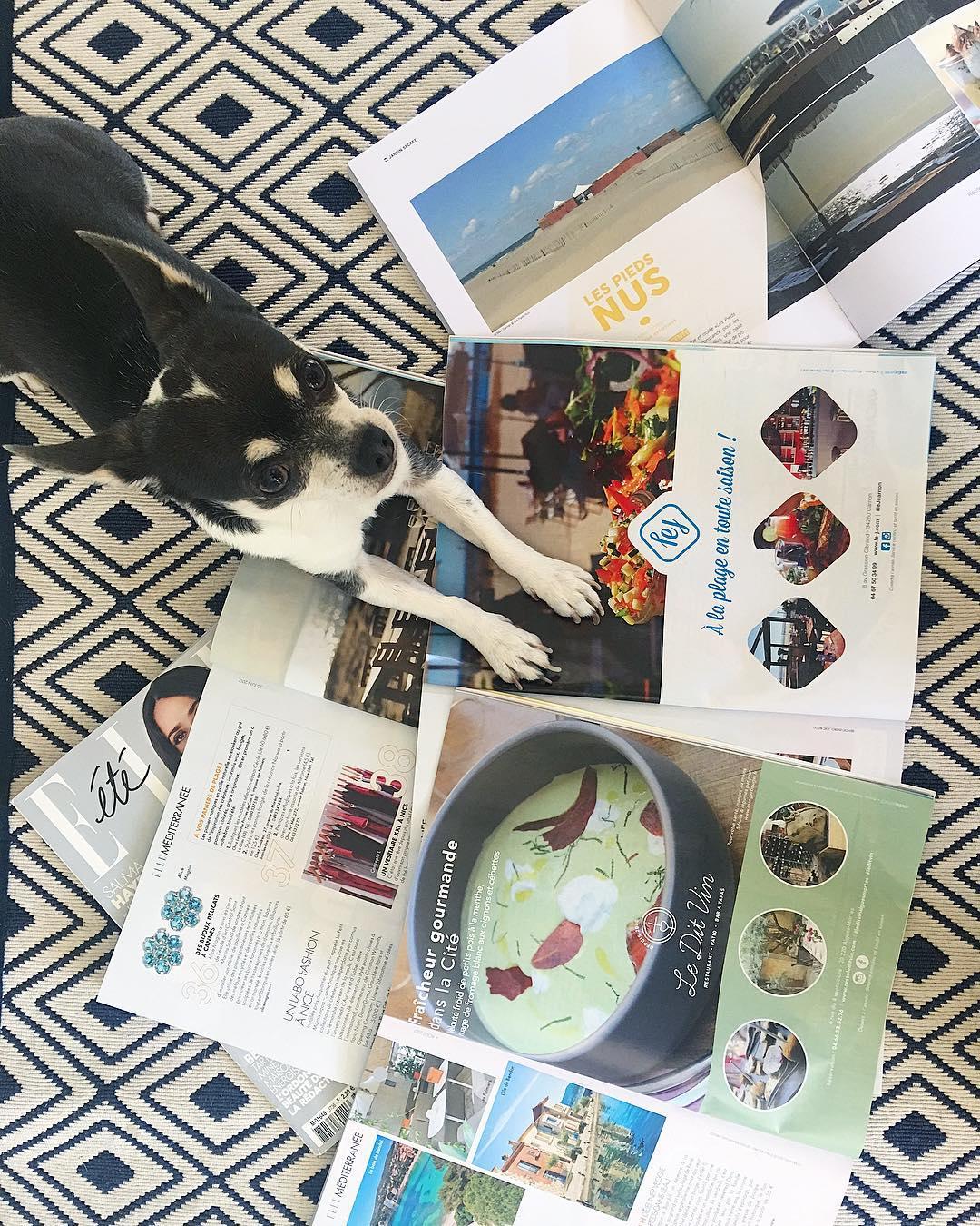 Attila et les devoirs de vacances... il a fait sa sélection avec les cOpines de @ellefr et @metropolitainfr : ➕ @leditvin ➕ @plagelespiedsnus ➕ @le_j_carnon . ❤️? On y court et articles à venir... dans la foulée !  ___________  #ellemagazine #presse #magazine #lejcarnon #plagelespiedsnus #leditvinaiguesmortes #occitanie #restaurant #food #blogfood #foodporn #montpellier #pintademontpellier #attilalechihuahua #chihuahua #dog #puppy