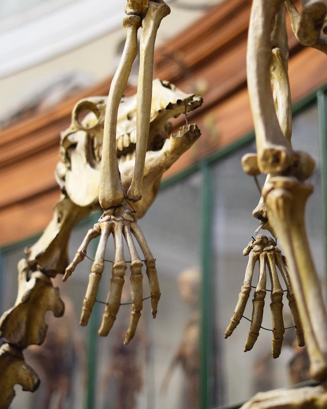 ✖️MUSEE D'ANATOMIE✖️ à la Faculté de Médecine lors des #JEP @jepofficiel . ➕ Journées Européennes du Patrimoine 2017 . ? Montpellier(34)?? .  _______________ #jep2017 #jep17 #jepmontpellier #jepmtp #journeeseuropeennesdupatrimoine #patrimoine #culture #patrimoine  #montpellier #pintademontpellier #blogtrip #travel #travelblog #travelblogger #citytripmontpellier #travelphotography #jeunesse #jeunesseetpatrimoine #ConcoursJEP
